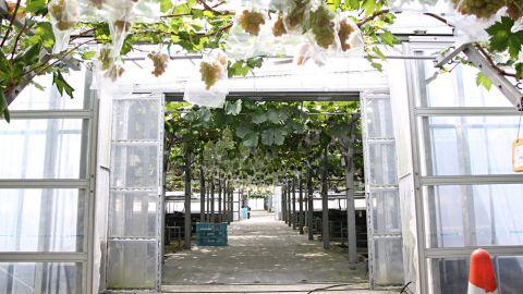 ぶどう園5