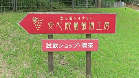 ぶどう園26