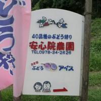 ぶどう園1